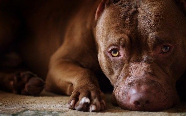 9 veshei o sobakah kotorye vy mogli ne znat 9 вещей о собаках, которые вы могли не знать