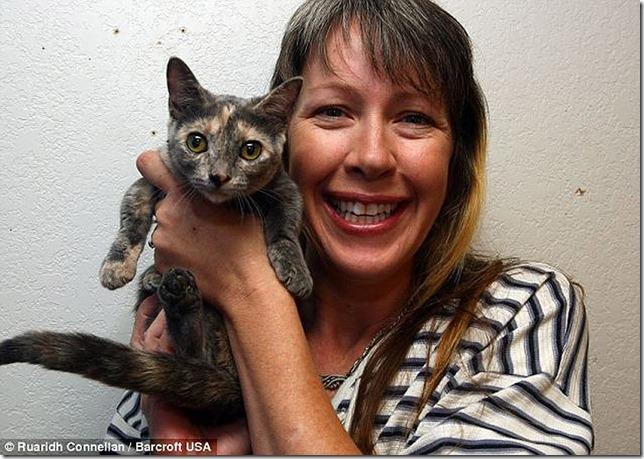 piksel koshka s samymi korotkimi lapkami v mire 6 Пиксель — кошка с самыми короткими лапками в мире