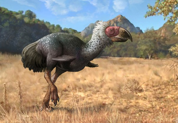 titanis vymershaya hishnaya ptica kotoraya pitalas bizonami Титанис — вымершая хищная птица, которая питалась бизонами