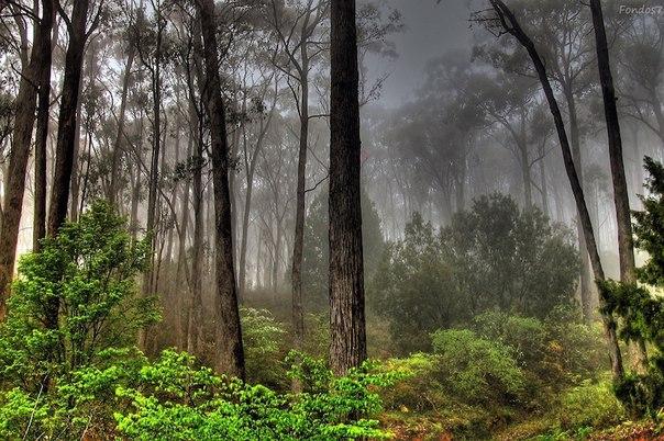devyat interesnyh faktov o lese Девять интересных фактов о лесе