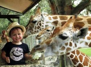 shveicarskim zooparkam zapresheno pokazyvat detenyshei jivotnyh Швейцарским зоопаркам запрещено показывать детенышей животных
