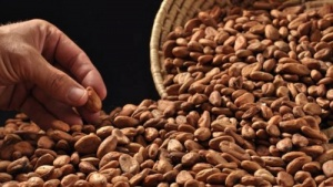 v dominikane proidet festival kakao В Доминикане пройдет Фестиваль какао