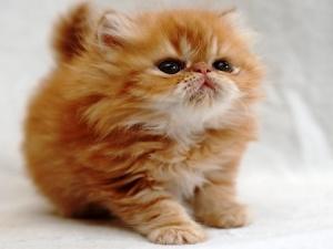 vsemirnaya vystavka koshek proidet v prage Всемирная выставка кошек пройдет в Праге