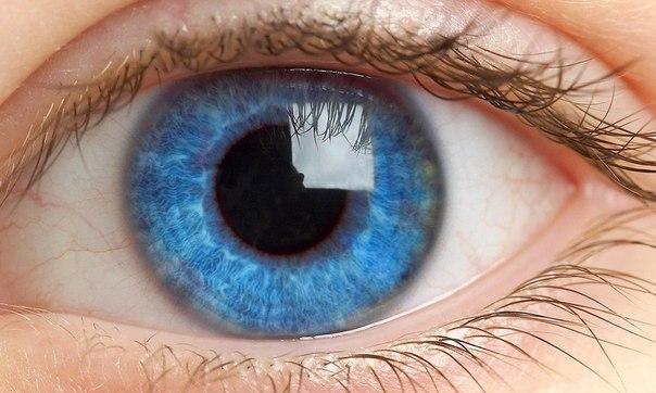15 faktov o glazah kotorye vas porazyat 15 фактов о глазах, которые вас поразят