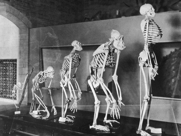 darvin oshibalsya evolyuciya vzyalas za lyudei vserez Дарвин ошибался: эволюция взялась за людей всерьез