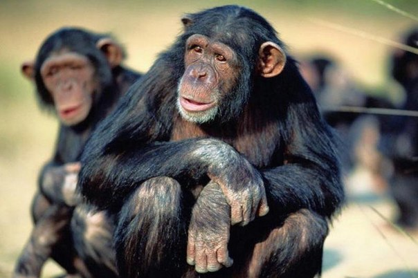 dengi razlagayut daje obezyan Деньги разлагают даже обезьян