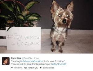 polzovateli interneta prizyvayut spasti sobaku ispanki bolnoi eboloi Пользователи интернета призывают спасти собаку испанки, больной Эболой
