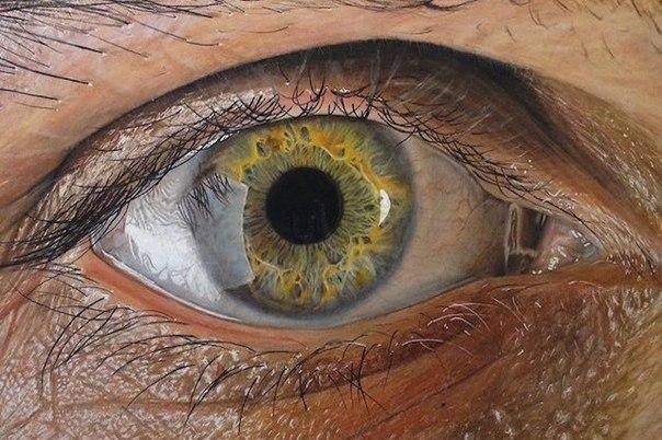 40 faktov o glazah kotoryh vy ne znali 40 фактов о глазах, которых вы не знали