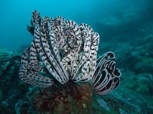 v tailande dlya posesheniya turistami otkrylsya morskoi zapovednik В Таиланде для посещения туристами открылся морской заповедник