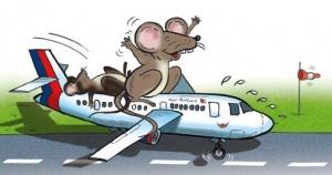 mysh stala prichinoi dlitelnoi zaderjki reisa v norvegii Мышь стала причиной длительной задержки рейса в Норвегии
