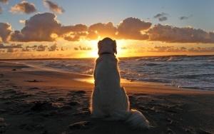 plyaj dlya domashnih jivotnyh poyavilsya v grecii Пляж для домашних животных появился в Греции