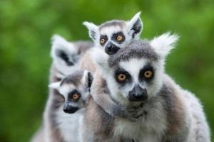 rossiyan prosyat vozderjatsya ot poezdok na madagaskar Россиян просят воздержаться от поездок на Мадагаскар