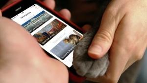 koshki v ermitaje prilojenie audiogid predlagaet novuyu ekskursiyu Кошки в Эрмитаже: приложение «Аудиогид» предлагает новую экскурсию
