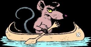 plyaj pattaii zapolonili tysyachi krys Пляж Паттайи заполонили тысячи крыс