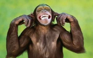v indiiskom aeroportu dva dnya lovili obezyan В индийском аэропорту два дня ловили обезьян