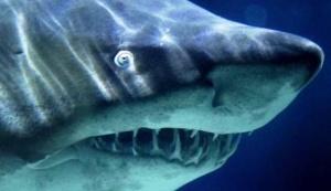 bassein s akulami otkrylsya v eilate Бассейн с акулами открылся в Эйлате