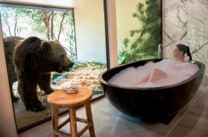 otel s dikimi jivotnymi otkrylsya v avstralii Отель с дикими животными открылся в Австралии