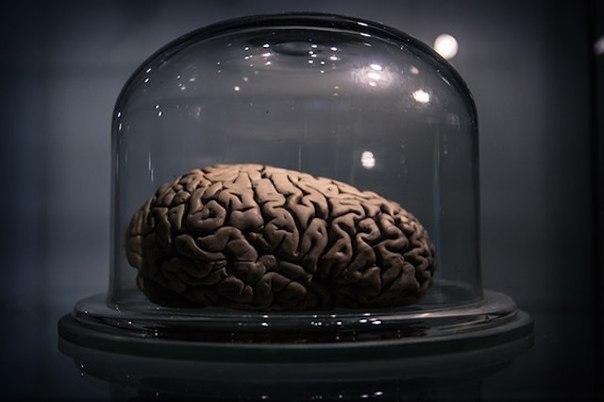 33 udivitelnyh fakta o chelovecheskom mozge 33 удивительных факта о человеческом мозге