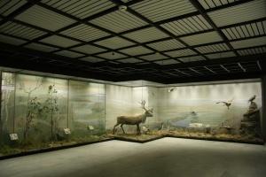 noch v muzee proidet v moskve 16 maya «Ночь в музее» пройдет в Москве 16 мая