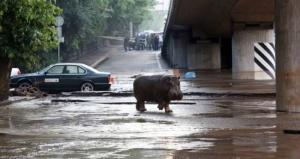 zoopark tbilisi pereedet na novuyu territoriyu Зоопарк Тбилиси переедет на новую территорию