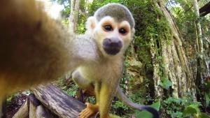 makaka ukrala kameru u turistki i sdelala selfi na bali Макака украла камеру у туристки и сделала селфи на Бали