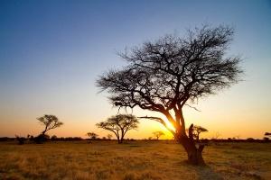 turist zastrelil jivogo simvola zimbabve vo vremya safari Турист застрелил живого символа Зимбабве во время сафари