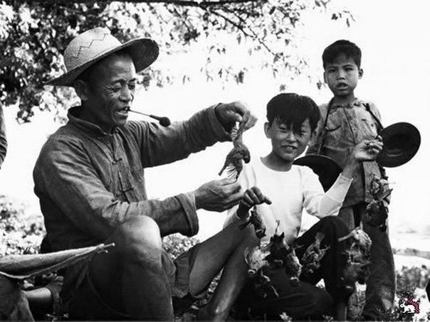chem zakonchilos totalnoe unichtojenie vorobev v kitae Чем закончилось тотальное уничтожение воробьев в Китае?