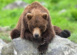 medved napal na turistov na kamchatke Медведь напал на туристов на Камчатке