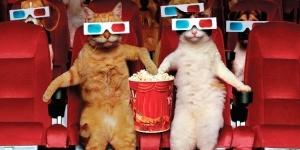 kinoteatr dlya domashnih jivotnyh mojet poyavitsya v moskve Кинотеатр для домашних животных может появиться в Москве