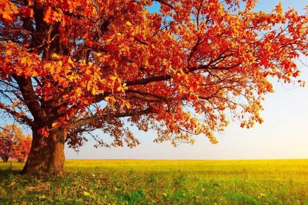 10 uyutnyh faktov ob oseni 10 уютных фактов об осени