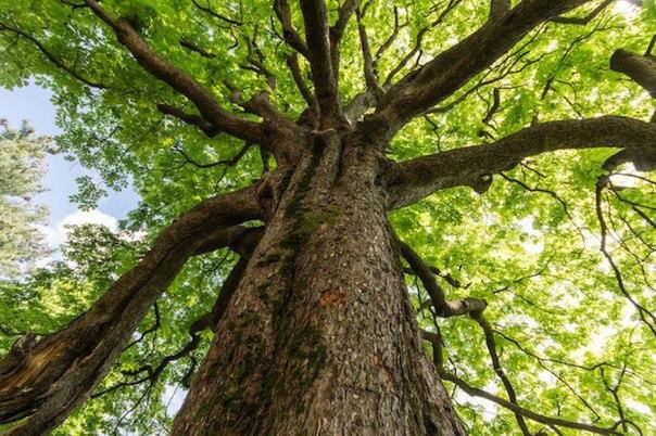 10 oshelomitelnyh faktov o derevyah 10 ошеломительных фактов о деревьях
