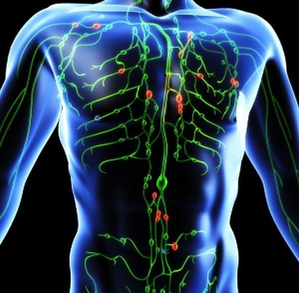 limfa jivaya voda nashego organizma Лимфа — живая вода нашего организма