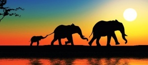 vo vetname otkryvaetsya pervyi v strane safari park Во Вьетнаме открывается первый в стране сафари парк