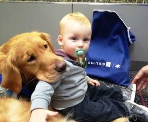 sobaki budut razvlekat passajirov v aeroportah ssha Собаки будут развлекать пассажиров в аэропортах США