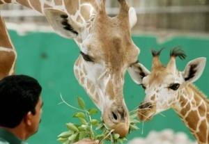 v dubae otkroetsya novyi zoopark В Дубае откроется новый зоопарк