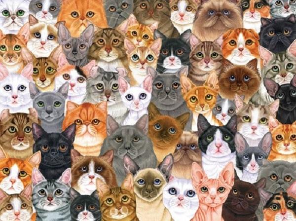 koshkin dom 1100 koshek i odna jenshina Кошкин дом. 1100 кошек и одна женщина.