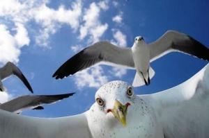 veneciya obyavila voinu chaikam Венеция объявила войну чайкам