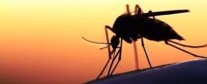 rossiyanka umerla ot malyarii posle poezdki v zambiyu Россиянка умерла от малярии после поездки в Замбию