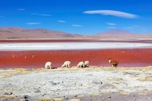 rossiiskim turistam bolshe ne nujny vizy dlya poezdok v boliviyu Российским туристам больше не нужны визы для поездок в Боливию