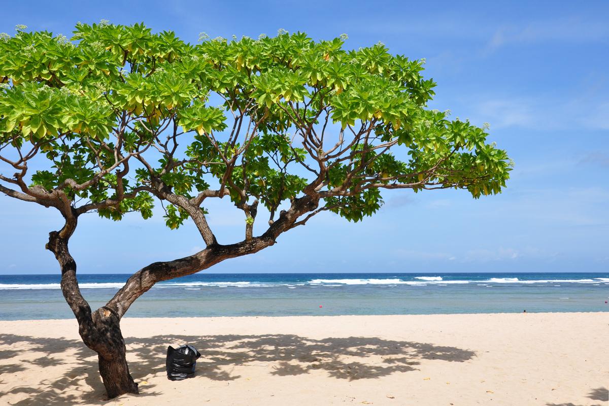 dostup turistam na bali ogranichat Доступ туристам на Бали ограничат