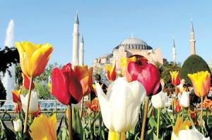Фестиваль тюльпанов пройдет в Стамбуле