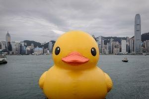 gonkong proshaetsya s gigantskoi jeltoi utkoi Гонконг прощается с гигантской желтой уткой