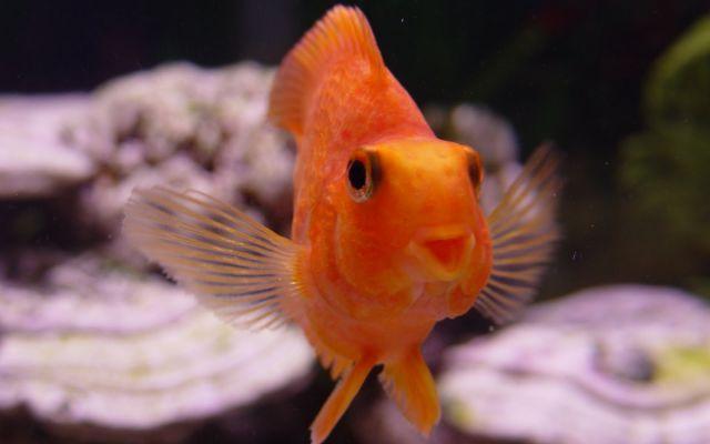 i zolotaya rybka v pridachu И золотая рыбка в придачу