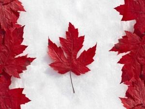 kanadcy po prejnemu zaderjivayut vizy Канадцы по прежнему задерживают визы