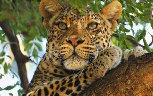 na shri lanke poyavitsya pervyi safari park На Шри Ланке появится первый сафари парк