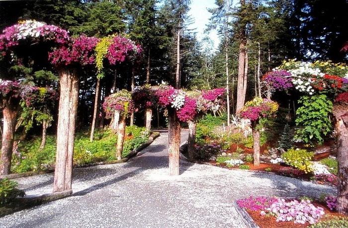 neobychnye klumby na kornyah derevev v botanicheskom sadu alyaski Необычные клумбы на корнях деревьев в ботаническом саду Аляски