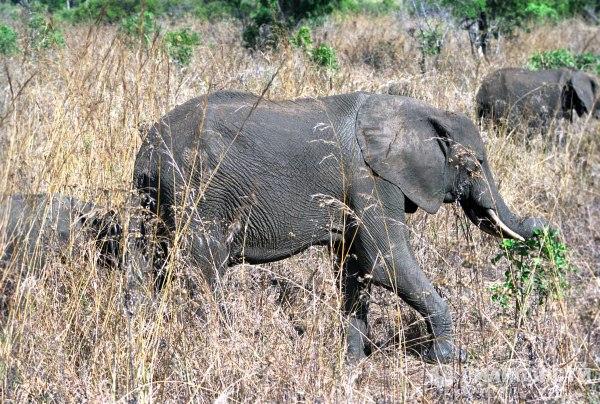 okolo 200 slonov pogibli v nacionalnom parke zimbabve Около 200 слонов погибли в национальном парке Зимбабве
