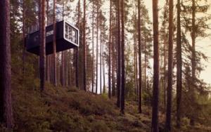 otel na dereve otkrylsya v shvedskom lesu Отель на дереве открылся в шведском лесу