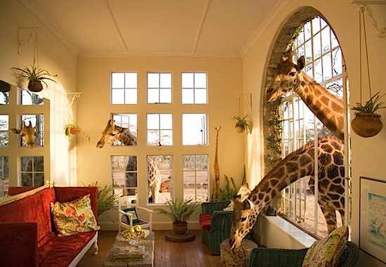 otel v kenii predlagaet zavtrak s jirafom Отель в Кении предлагает завтрак с жирафом