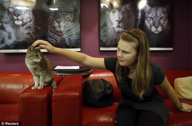 piterskoe kafe predlagaet poigrat s koshkami za chashechkoi kofe Питерское кафе предлагает поиграть с кошками за чашечкой кофе